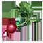 ON-icon-food-Radish.png