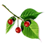 ON-icon-food-Comberry.png