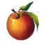 http://www.uesp.net/w/images/d/d4/ON-icon-food-Apples.png