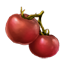 ON-icon-food-Tomato.png