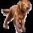 ON-icon-pet-Bravil Retriever.png